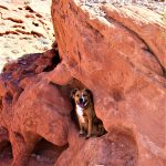 Dogs at Valley of Fire