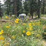 Cedar Canyon Campground