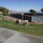 Hemenway Park in Boulder City NV