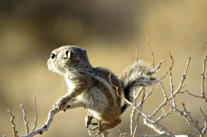 Nevada Wildlife