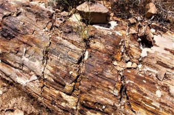 Petrified Logs at the Valley of Fire 5