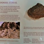 What is Fossil Coral