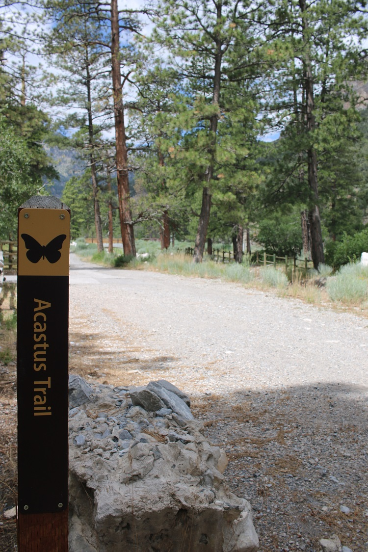 Acastus Trail at Mt Charleston (1)