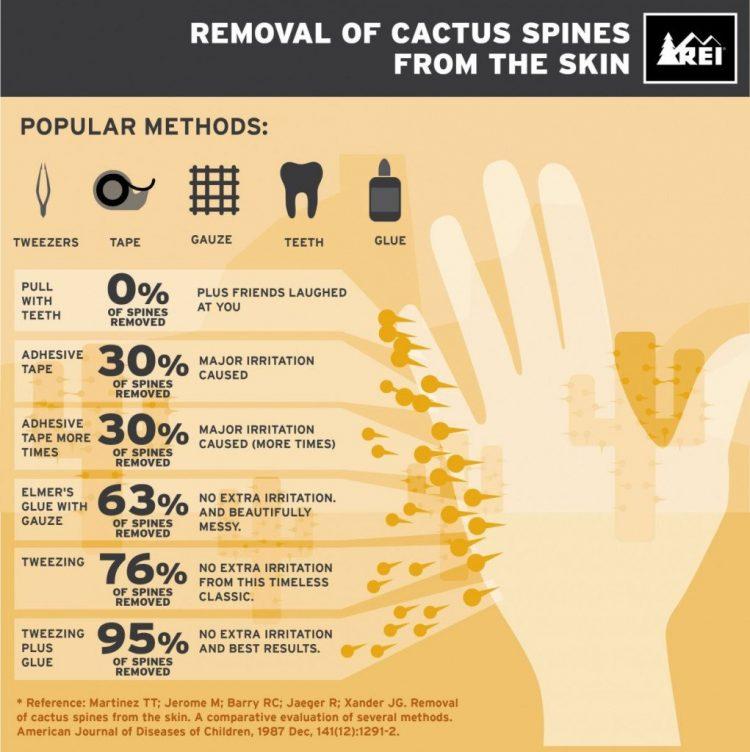 cactus spine