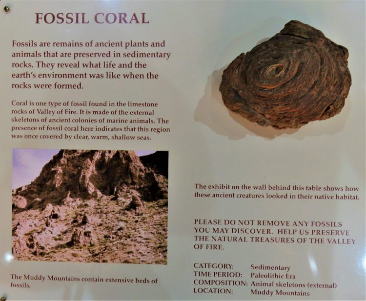 What is Fossil Coral?